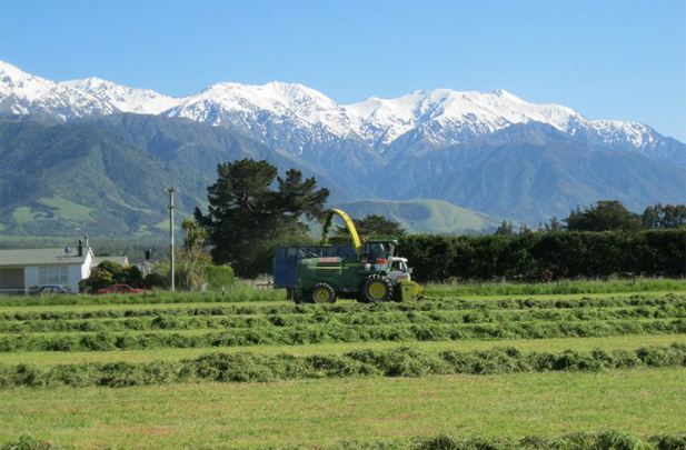 Kaikoria Flintoft Contractors Silage