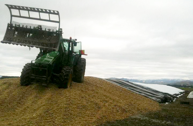 Stack tractor on silage stack Flintoft Contractors